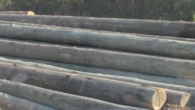 Pinus alto clave madeira tratada - Foto 4