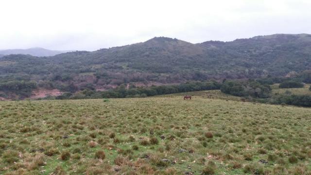 Fazenda Pecuaria - Foto 3