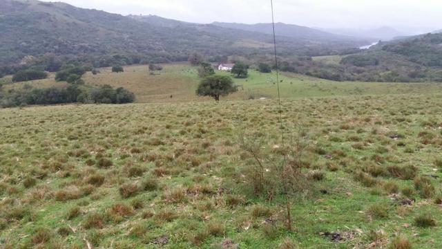 Fazenda Pecuaria - Foto 5