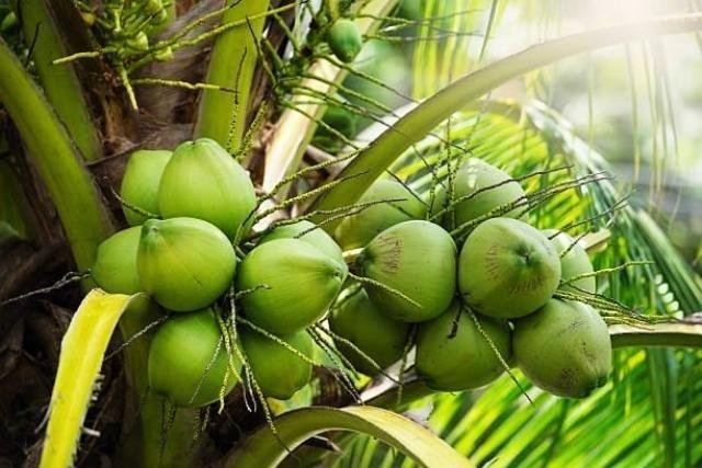 Côco Verde entrega em Campos e São Francisco de Itabapoana - Foto 2