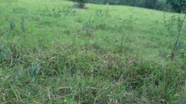 Fazenda 180 Há em São José da Varginha - Foto 11