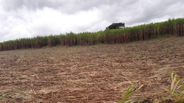 Fazenda 180 Há em São José da Varginha - Foto 9