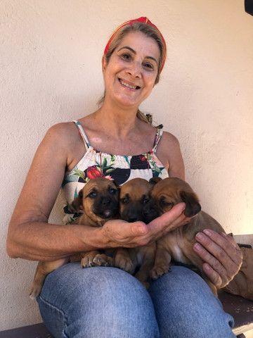 Doação de cachorro Macho  - Foto 3