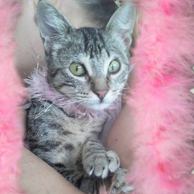 Doação linda gatinha tigradinha castradinha 5 meses  - Foto 2