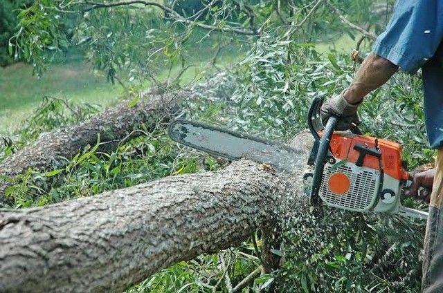 Corte de árvore galhos  - Foto 4