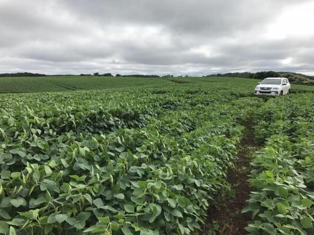 Fazenda à venda,  R$ 18.900.000 - Pitanga/PR - Foto 4