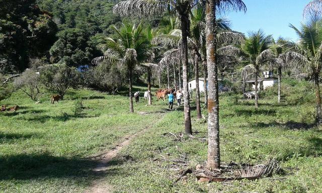 Vendo fazenda com 32 alqueres - Foto 9