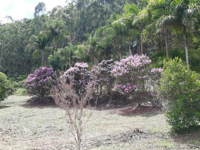 Linda chácara 3.000² a 7 km do trevo de Fazenda do Estado e 15km de Pedra Azul D.M.!! - Foto 10