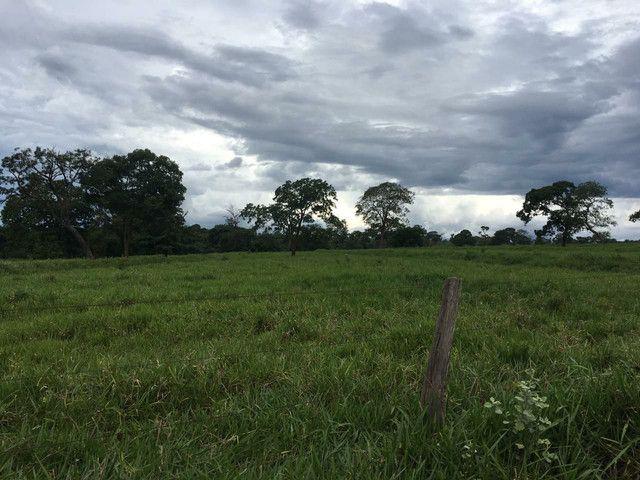 Fazenda 95 Alqueires | 130 km Rio Verde | oport. Única  - Foto 5