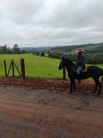 Égua mm sem registro égua pra cavalgada  - Foto 4