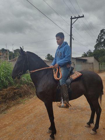 Égua mm sem registro égua pra cavalgada  - Foto 2