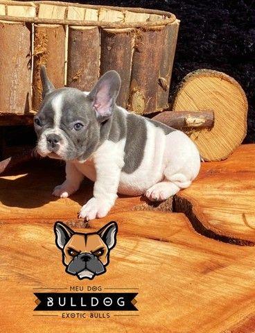 Bulldog frances - Foto 2