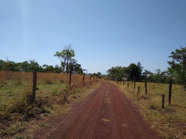 Fazenda localizada no Bezerra - Formosa/GO - Foto 3