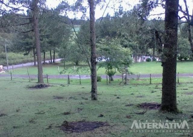 Ótimo Terreno Rural 32.000m2, Vila Volta Grande - Rio Negrinho SC. Oportunidade - Foto 18