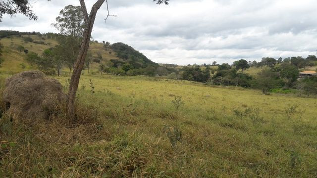 Fazenda 180 Há em São José da Varginha - Foto 19