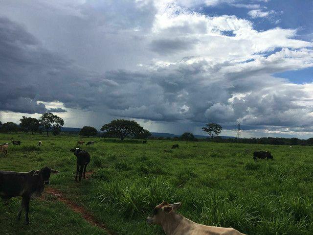 Fazenda 95 Alqueires | 130 km Rio Verde | oport. Única  - Foto 3
