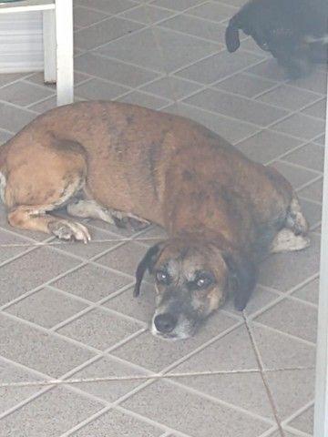 Cachorro castrado - Foto 2