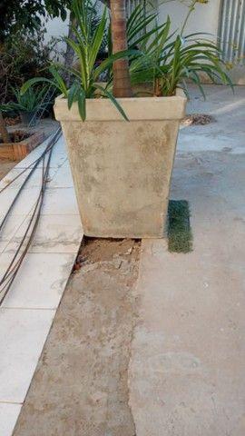 Palmeira Imperial Vectra  - Foto 3