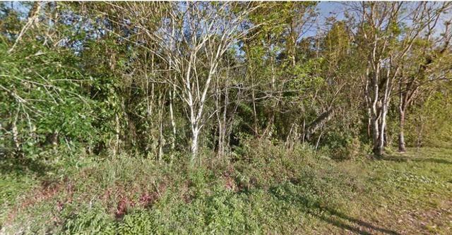 Ubatuba SP - Mata Atlântica   Área Comp. Ambiental, Parque, APP, Santuário, 715 alqueires - Foto 13