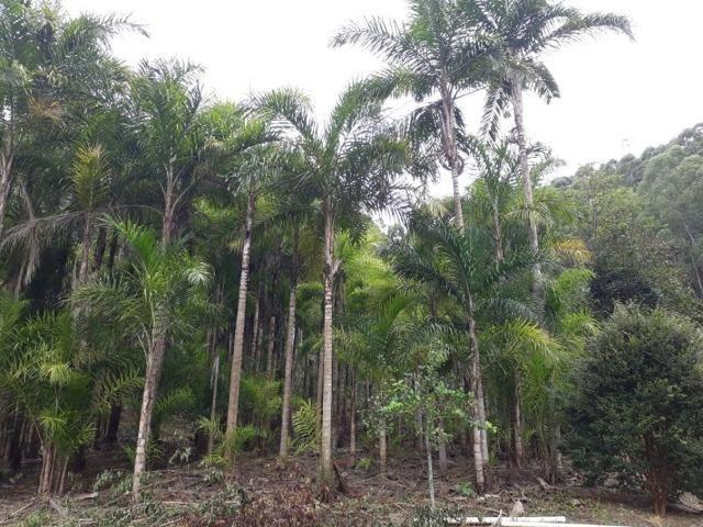 Linda chácara 3.000² a 7 km do trevo de Fazenda do Estado e 15km de Pedra Azul D.M.!! - Foto 19