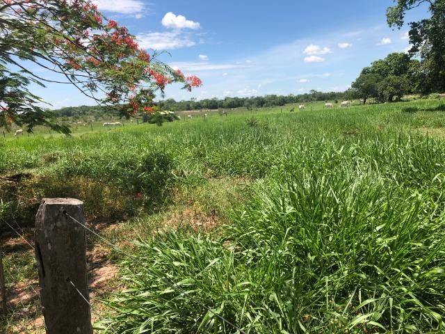 300 hectares, Cuiabá, 220 Hectares pasto, 23 km Atacadão, perto BR 364 - Foto 11