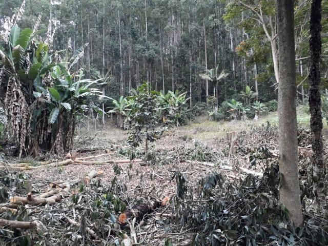 Linda chácara 3.000² a 7 km do trevo de Fazenda do Estado e 15km de Pedra Azul D.M.!! - Foto 5