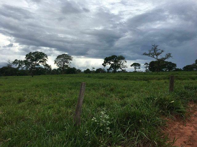 Fazenda 95 Alqueires | 130 km Rio Verde | oport. Única  - Foto 4