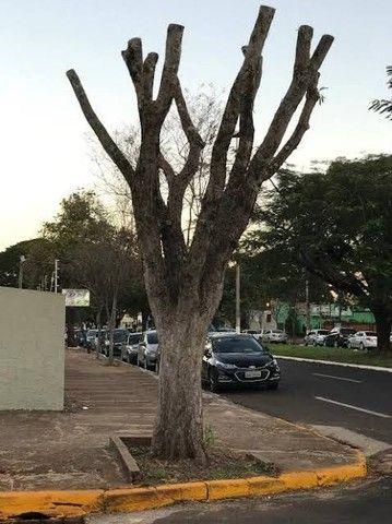 Corte de árvore galhos  - Foto 5