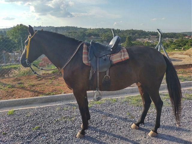 Égua mm sem registro égua pra cavalgada  - Foto 5