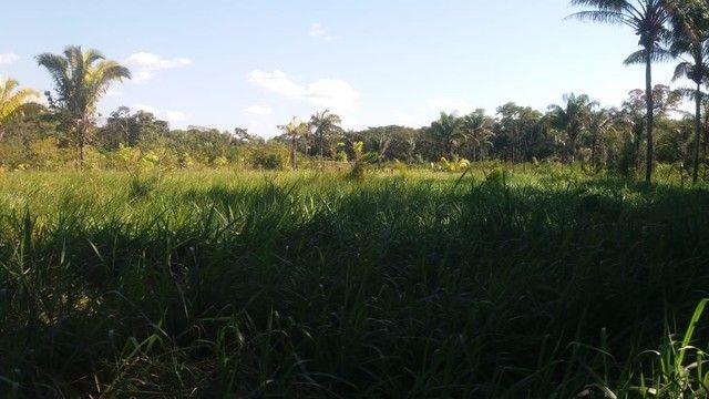 Vendo uma hectaria de terra - Foto 5