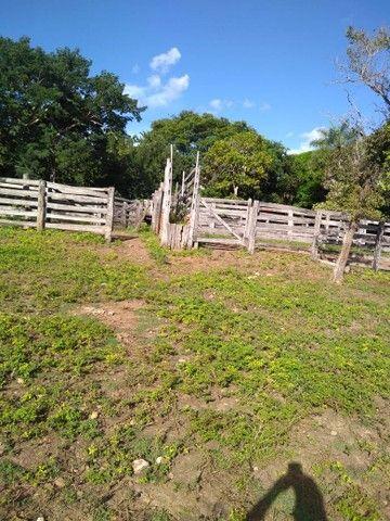 Vendo uma linda fazenda no município de conceição do Tocantins 15 milhões   - Foto 15