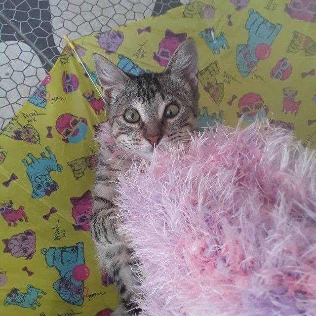 Doação linda gatinha tigradinha castradinha 5 meses  - Foto 5