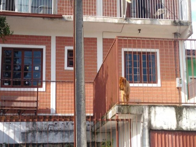 Casa em Forquilhas, São José/SC de 200m² 4 quartos à venda por R$ 318.000,00 - Foto 5