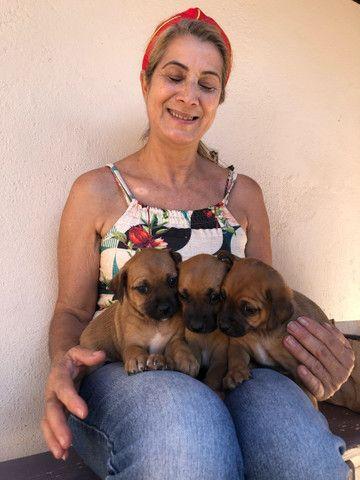 Doação de cachorro Macho  - Foto 2