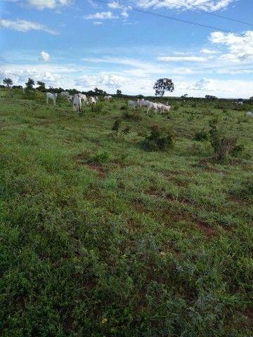 Vendo uma linda fazenda no município de conceição do Tocantins 15 milhões   - Foto 3