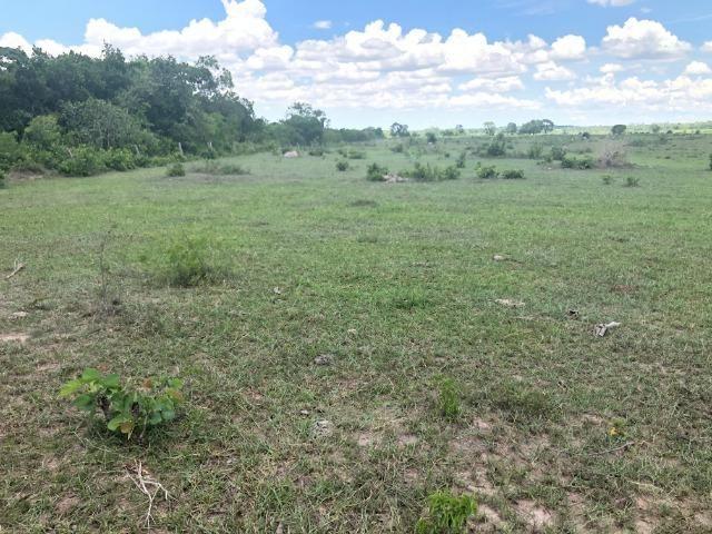 300 hectares, Cuiabá, 220 Hectares pasto, 23 km Atacadão, perto BR 364 - Foto 8