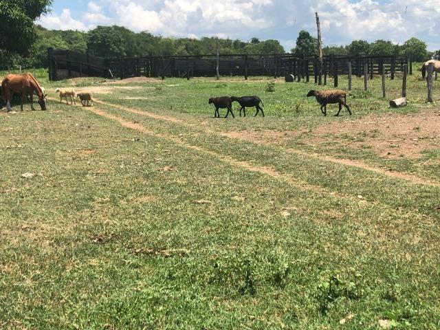 300 hectares, Cuiabá, 220 Hectares pasto, 23 km Atacadão, perto BR 364 - Foto 6