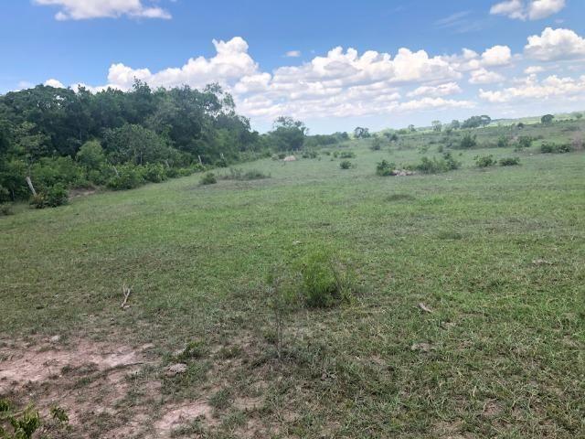 300 hectares, Cuiabá, 220 Hectares pasto, 23 km Atacadão, perto BR 364 - Foto 7