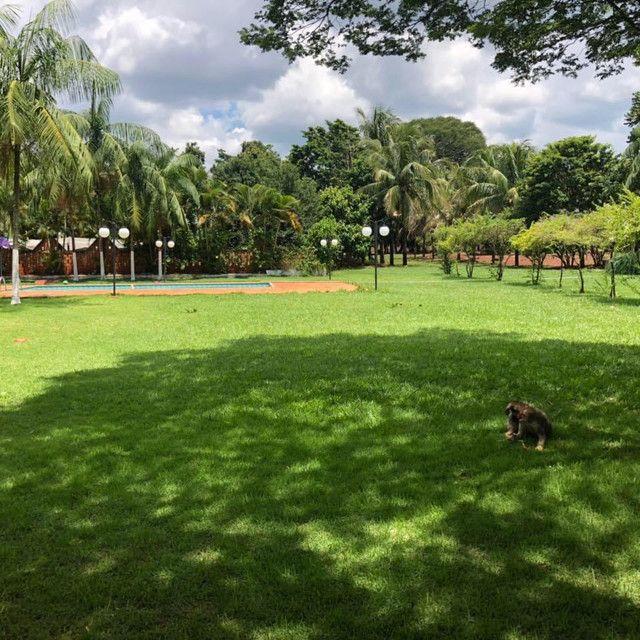 Chácara a 15min do centro de Maringá - Foto 4