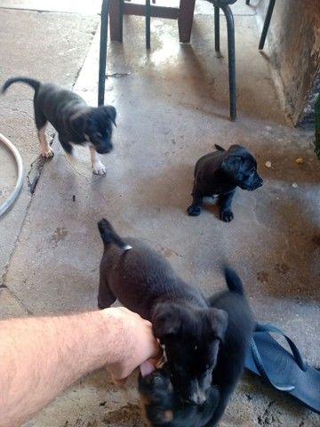 Doação de cachorros - Foto 3