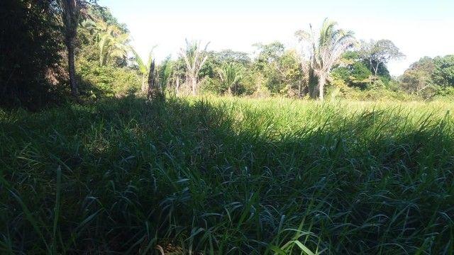 Vendo uma hectaria de terra - Foto 2