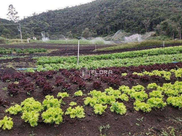 Terreno à venda, 32240 m² por R$ 778.000 - Posse - Petrópolis/RJ - Foto 13