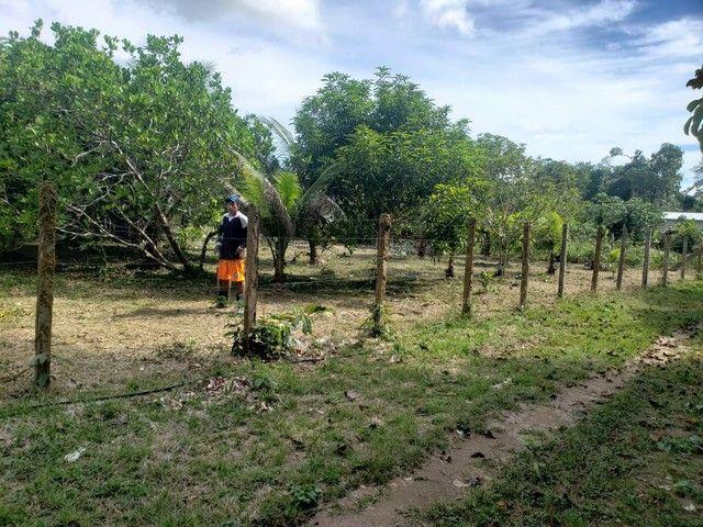 Terreno km 10 Estrada Novo Airão  - Foto 2