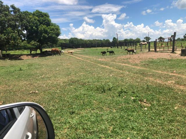 300 hectares, Cuiabá, 220 Hectares pasto, 23 km Atacadão, perto BR 364 - Foto 9