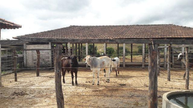 Fazenda 180 Há em São José da Varginha