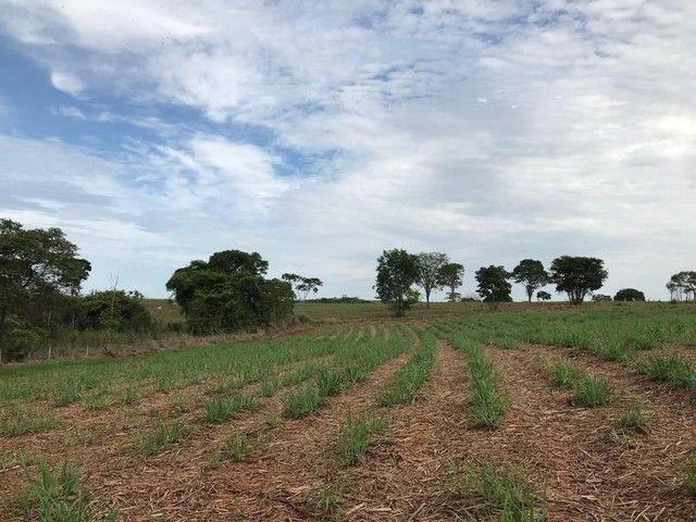 Fazenda Brazabrantes 12 alq. Planos ! - Foto 8