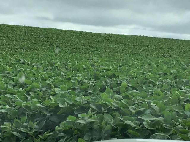 Fazenda à venda,  R$ 18.900.000 - Pitanga/PR