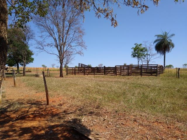Fazenda localizada no Bezerra - Formosa/GO