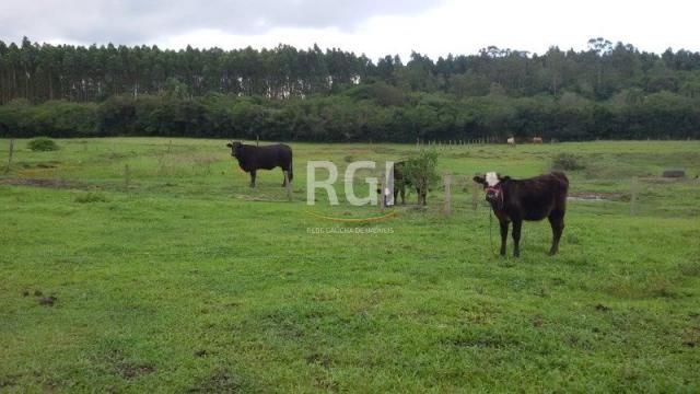 Sítio à venda com 3 dormitórios em Olaria, Triunfo cod:MF22250 - Foto 19