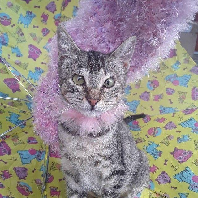 Doação linda gatinha tigradinha castradinha 5 meses  - Foto 3